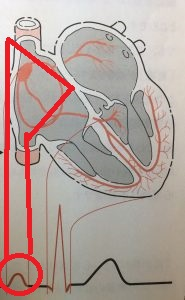 P波は心房からの刺激