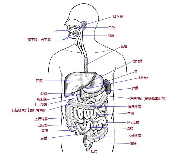 内臓の部位