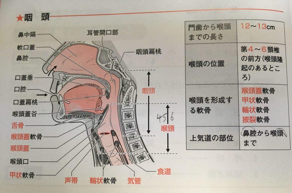 口腔内の呼び方