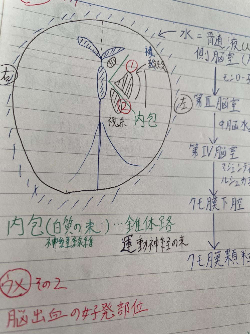 救急救命士東京研修所エルスタのノート