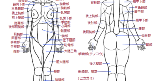 身体の部位の呼び方